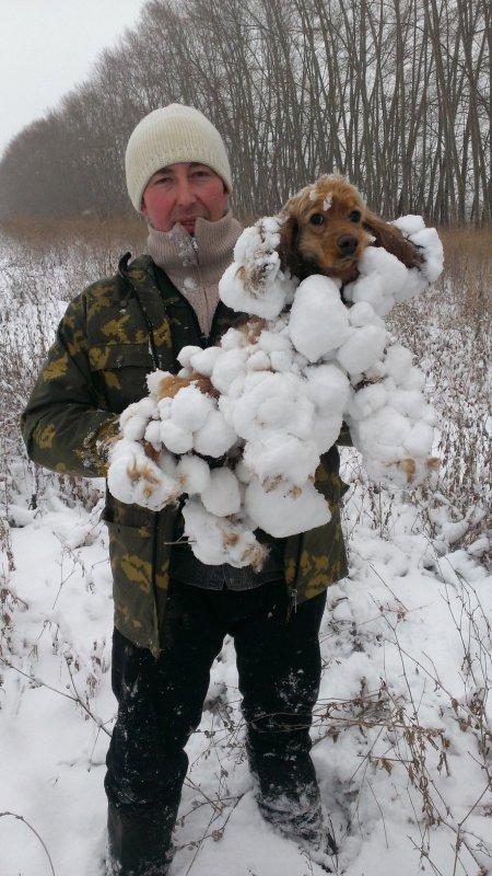 Собака-снегособирака