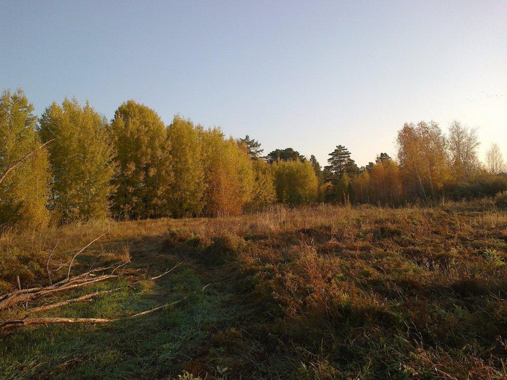 поляна у заимки