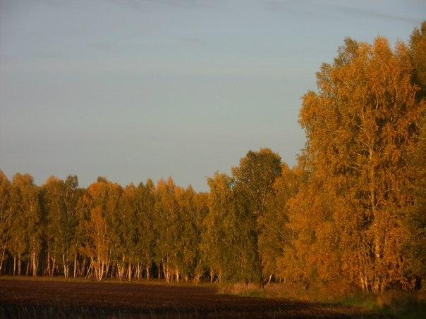 Осенний лес....