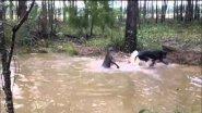 Собаки поймали Чупакабру |  Dogs caught Chupacabra