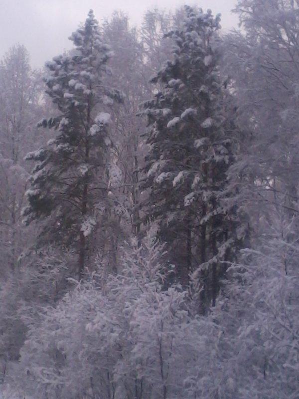 25.11.2015г. вот такой сегодня сказочный лес.