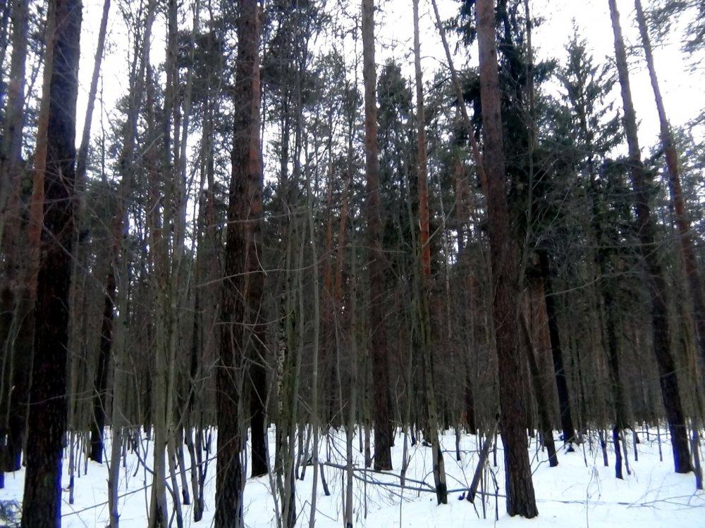 Ноябрьская оттепель в лесу.