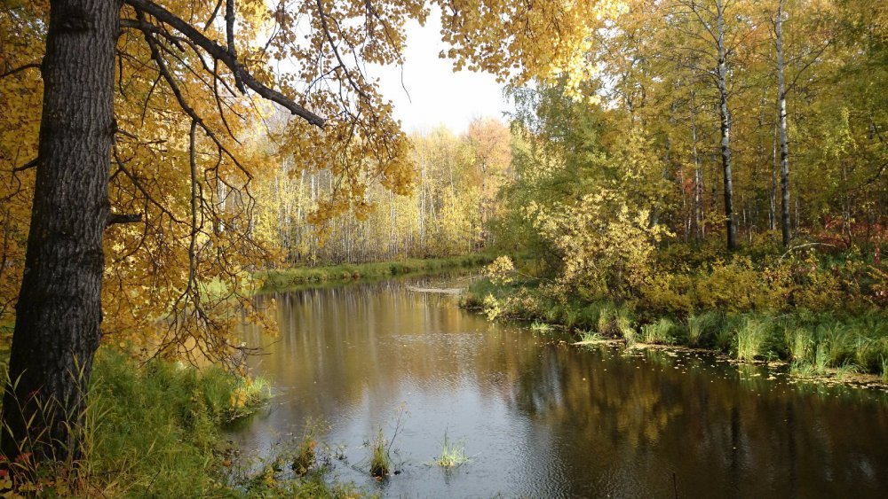 """""""золотая осень"""""""