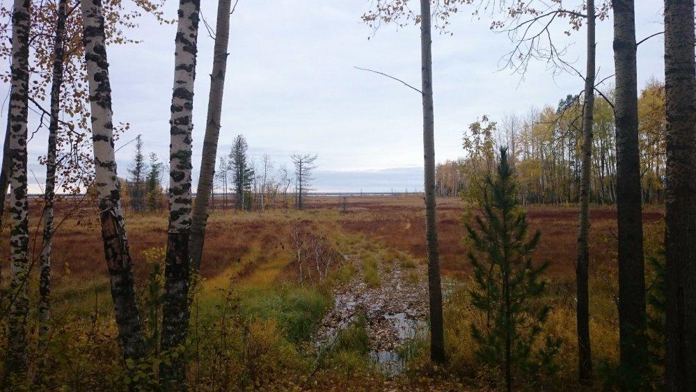 Озеро в болоте...