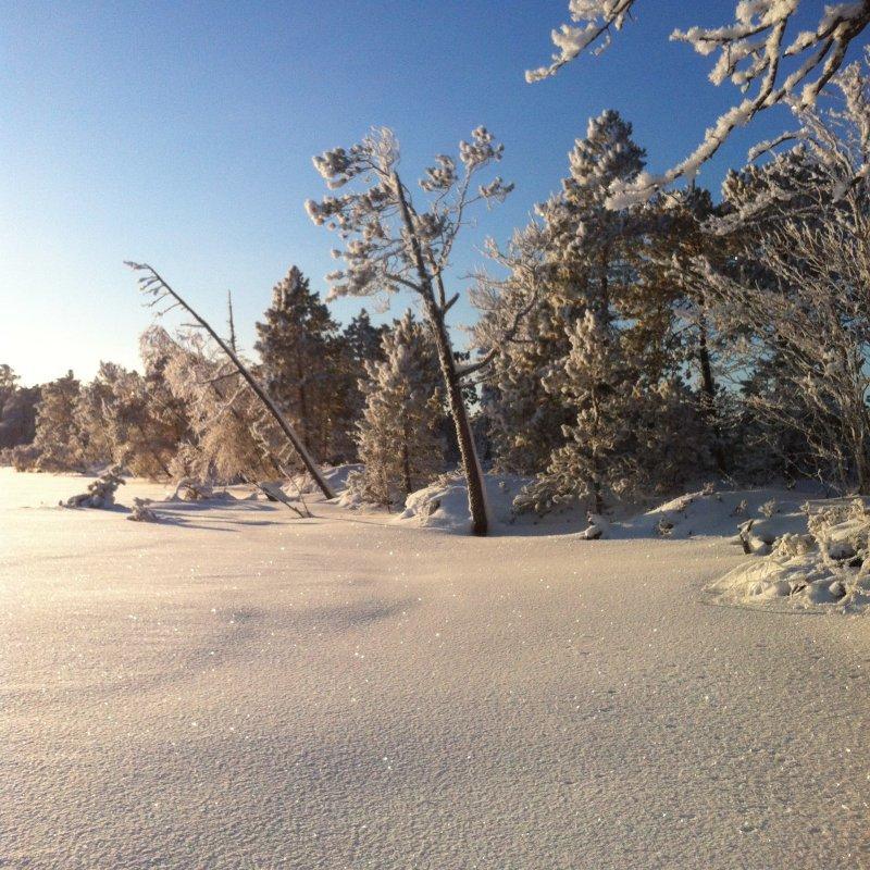 Сказочный лес!