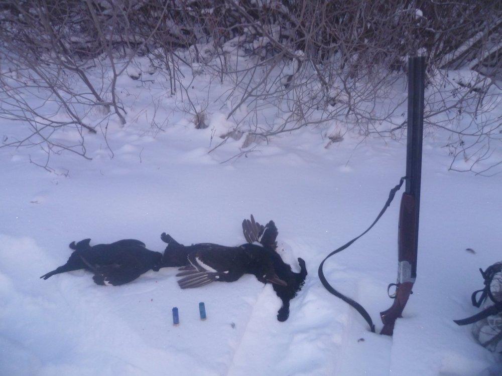 Тетерева с лунок или 15км переход по снегам и рощам на лыжах