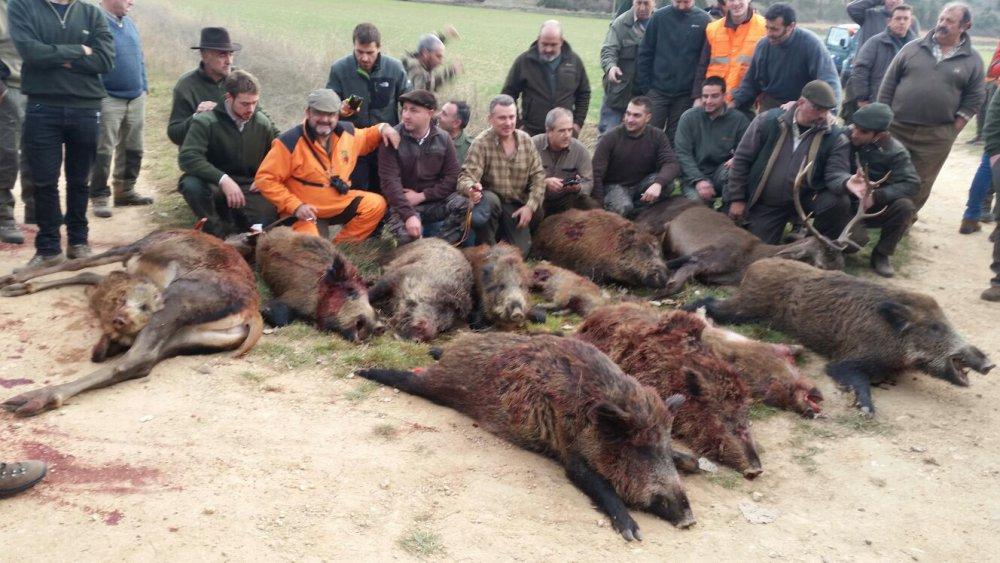 27-12-2015  загонной охоты