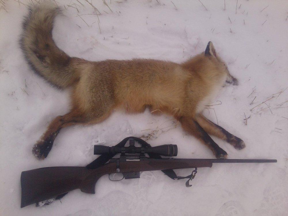 Открылся по лисичке.