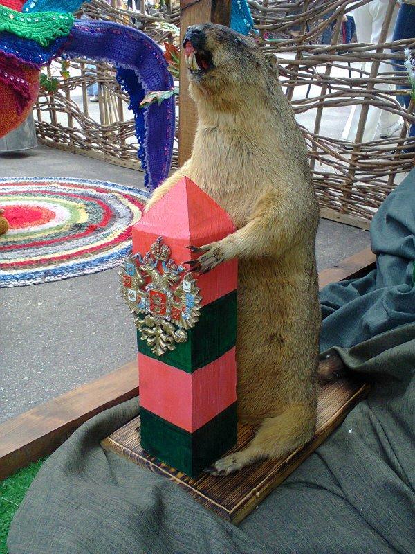 Сурок-байбак - один из символов Ростовской области