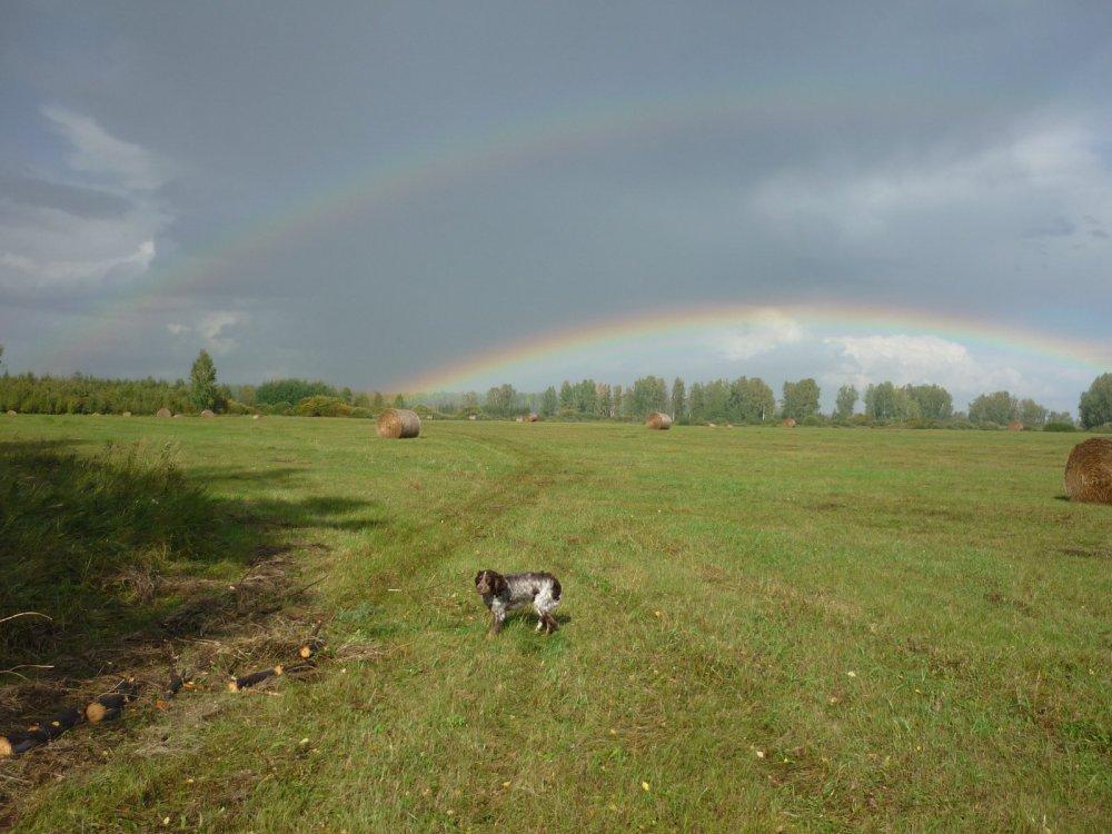 Арка, из радуги.....