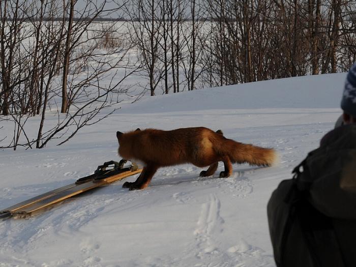 Все на лыжню)