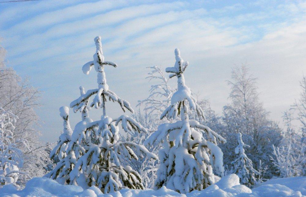 Зимушка-зима.