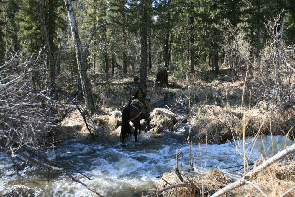 Весной за медведем