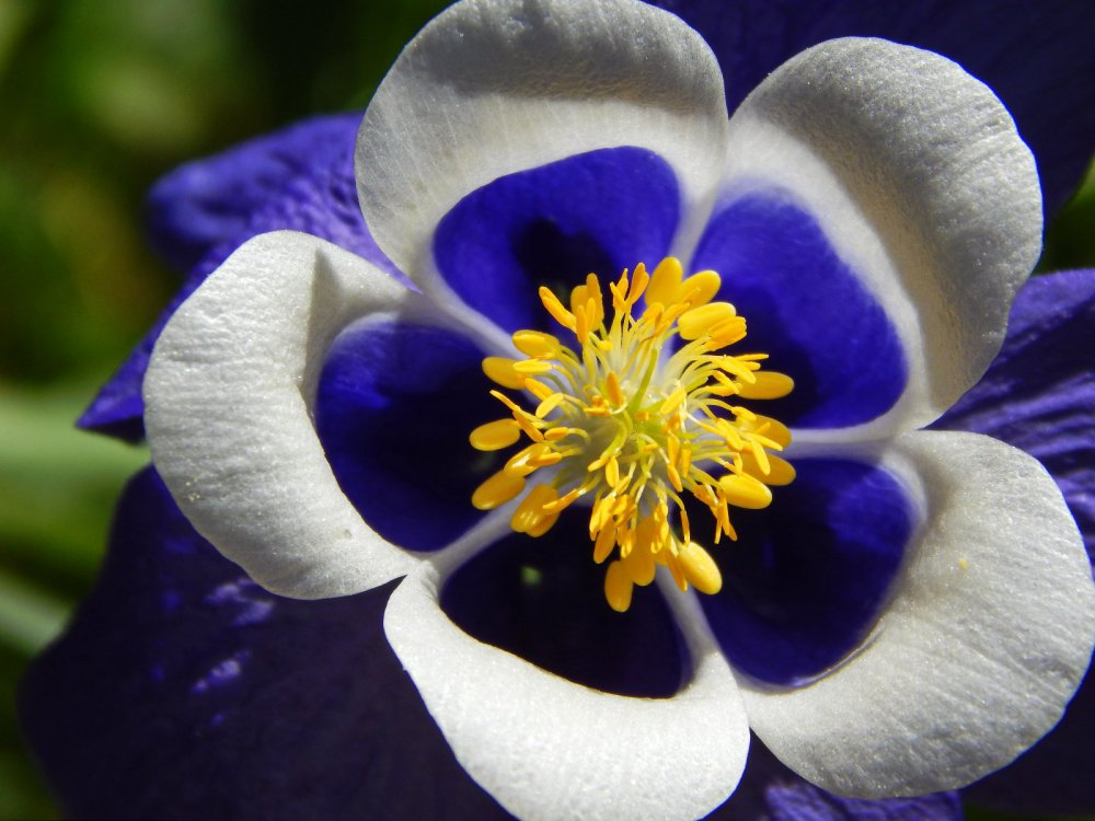 Неизвестный мне цветок