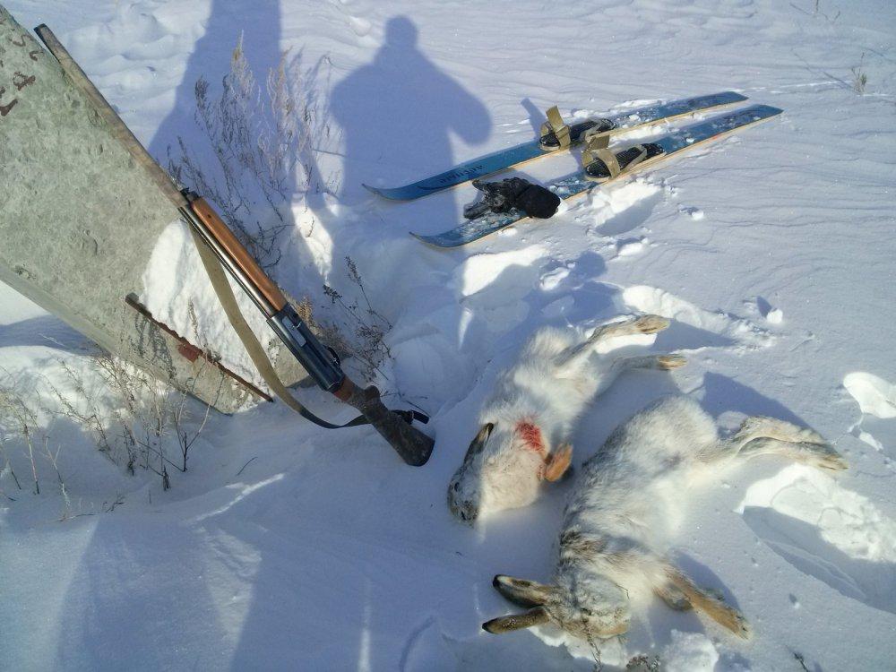 охота на русака с мц22 январь2016