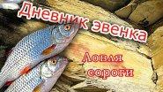 Рыбалка: ловля рыбы сорога