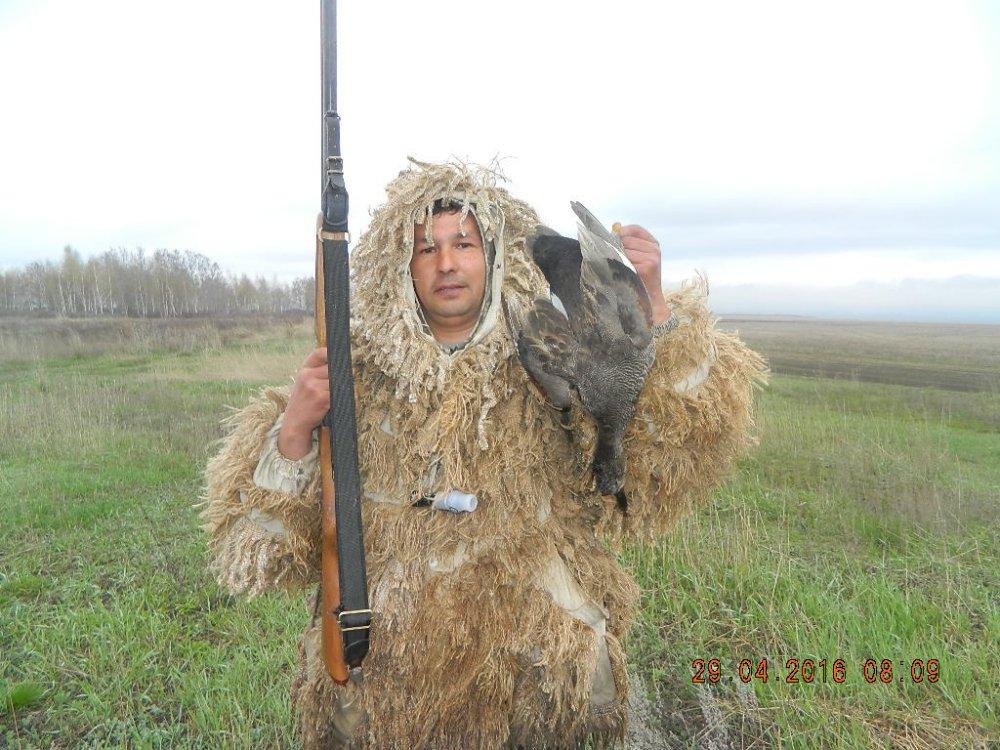Селезень серой утки.