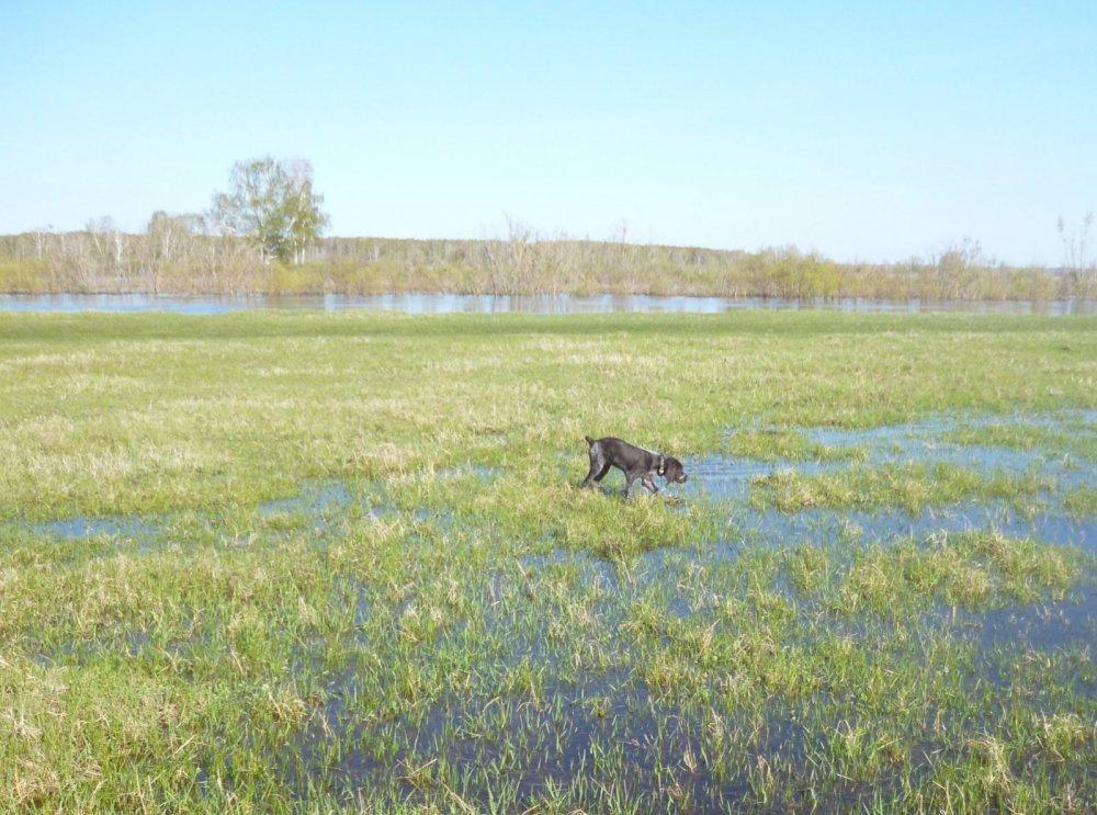 Первая прогулка в поле
