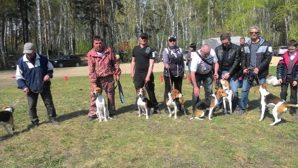 Выставка охотничьих собак г.Новосибирск 2016г.