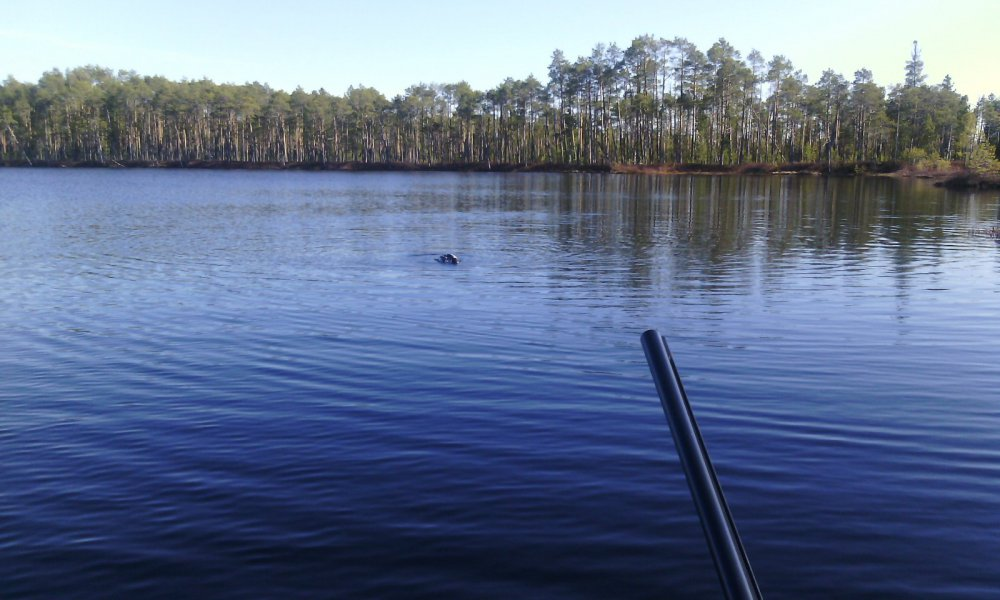 На лесном озере