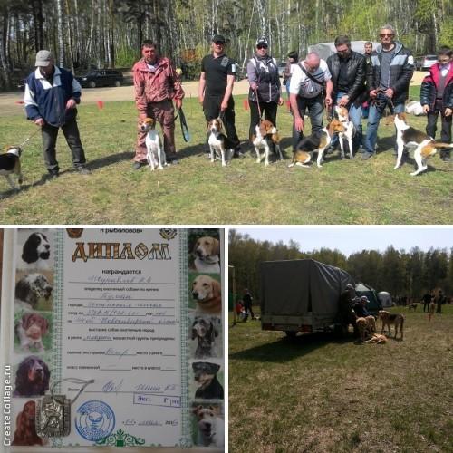 """ОО """"Новосибирское ООО и Р"""" проводит 44-ю Новосибирскую областную выставку собак охотничьих пород."""