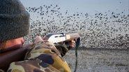 Охота на уток в Прибайкалье. Утиные будни.
