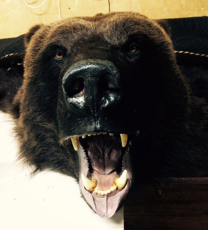 Ковер медведя.