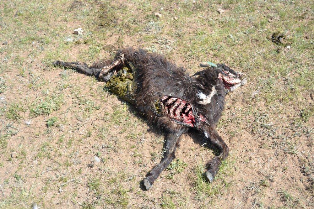 Еще одна жертва грифов