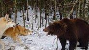 Охота на крупного медведя!