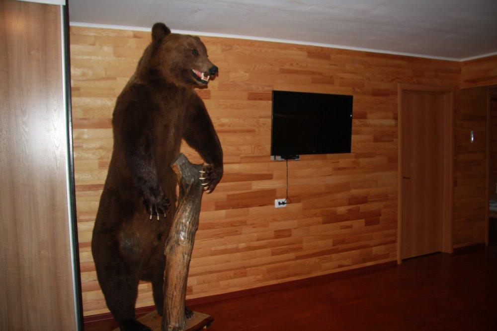 Медведи Алтая