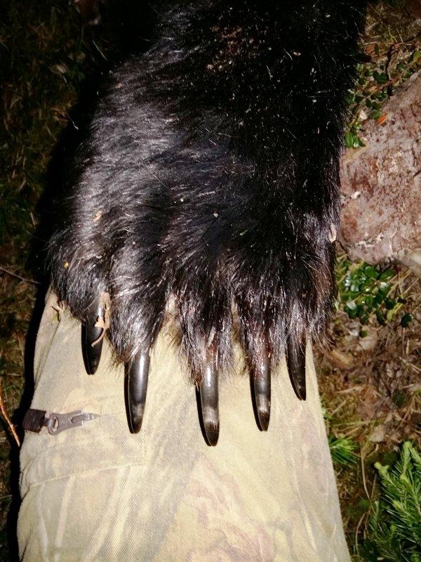 Медведь 4.06. 2016