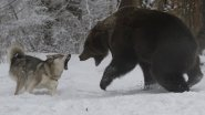 Охота на медведя в Якутии! Якутский промысел...