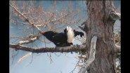Осенняя охота на боровую птицу! Якутия!