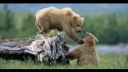 Охота на бурого медведя на приваде