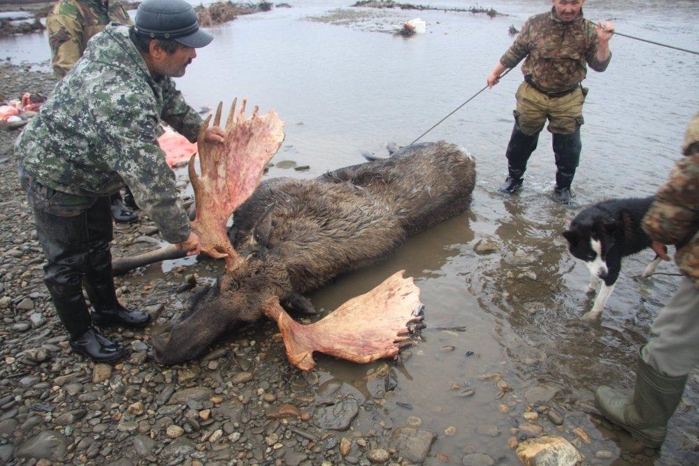 Якутский лось
