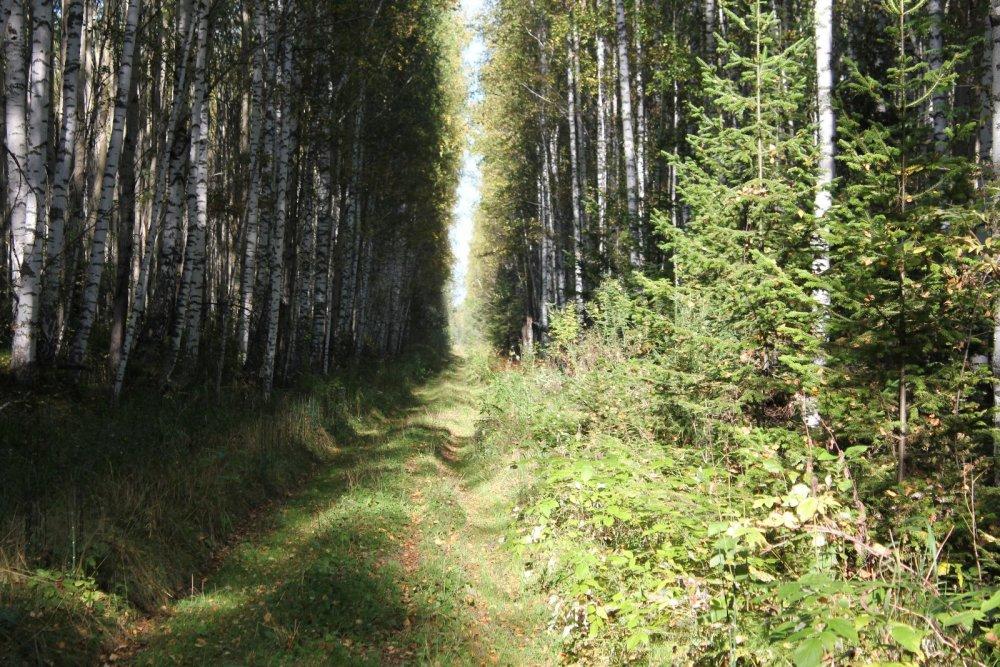 По лесной дороге.