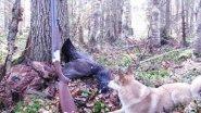 Охота на глухаря! Из цикла Охота в регионах России