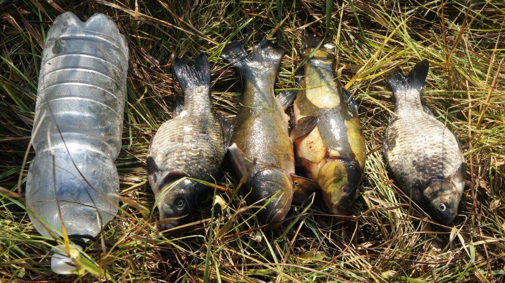Охота рыбалка совместимы.