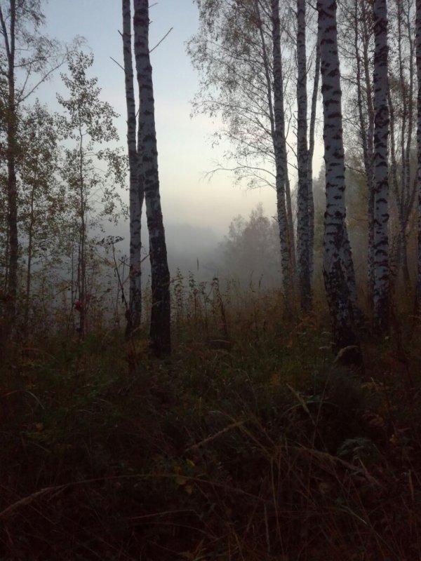 утро на охоте.