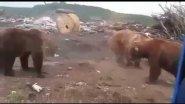 Голодные медведи на Сахалине 2016