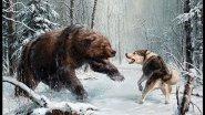 Охота на медведя ¦ Разные моменты ¦  Best Bear hunting ¦