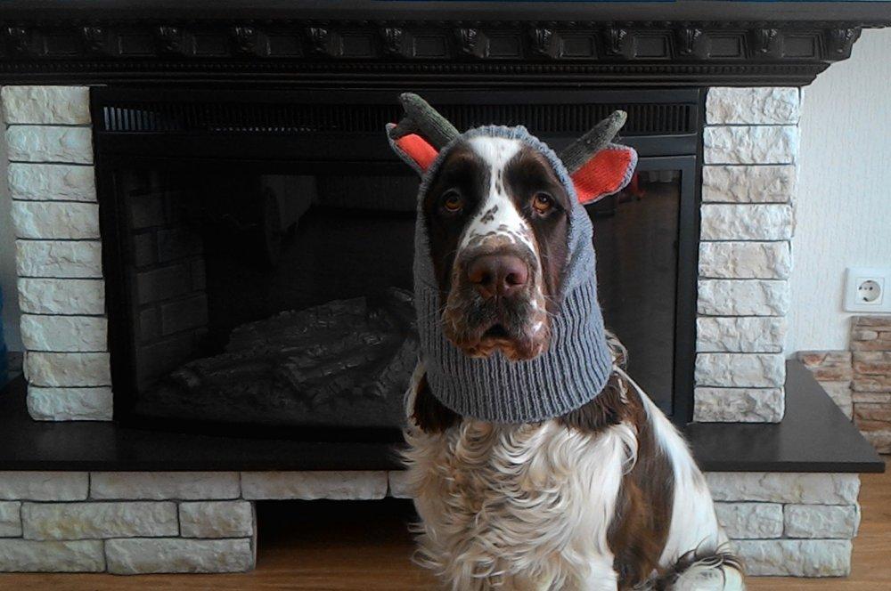 """Машину """"переобул"""",собаку приодел, можно встречать зиму..."""