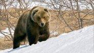Охота на медведя на полярном  Урале. Вторая часть.