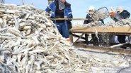 Рыбалка в тайге. Якутский невод. Река Мунгха. Таежная жизнь рыбаков.