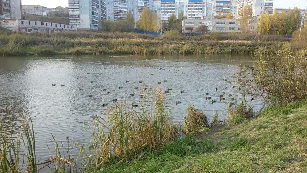 На городском озере