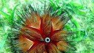 5% Подводного Мира...Филиппины