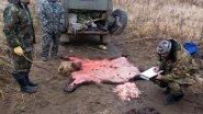 Браконьерство! Как незаконно  добывают лосей и медведей на северах!