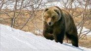 Охота на медведя на полярном Урале