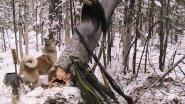 Северные охотники-промысловики!