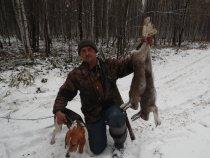 Охота с эстонской гончей!!